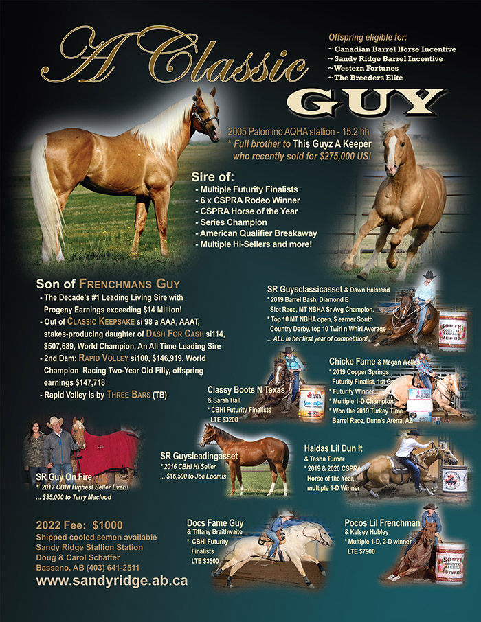 A Classic Guy - Palomino Son of Frenchmans Guy - Standing at Sandy Ridge Stallion Station