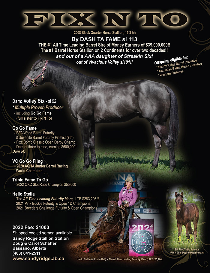 Fix N To - black quarter horse stallion by Dash Ta Fame out of AAA daughter of Streakin Six